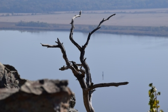 The 'bones' of this tree seem right at home among the rocks. Stout's Point, Arkansas River in the background